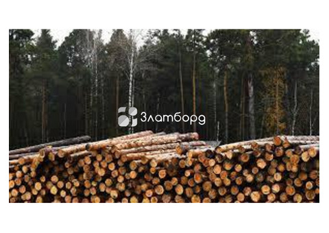 Организация закупает круглый лес пиловочник., Иркутск
